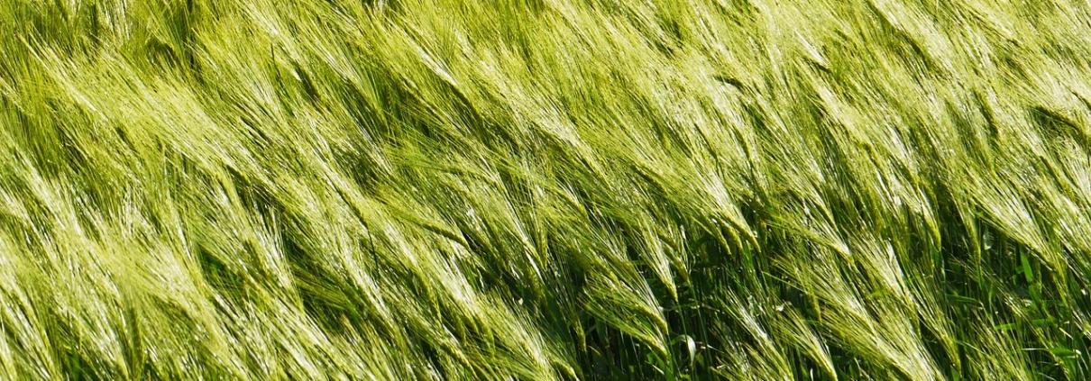 Resilienz wie Gras bekommen